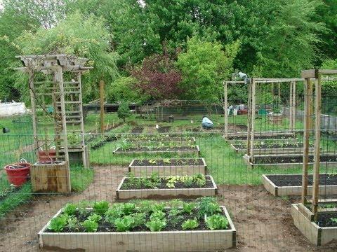 Backyard Organic Gardening Ideas