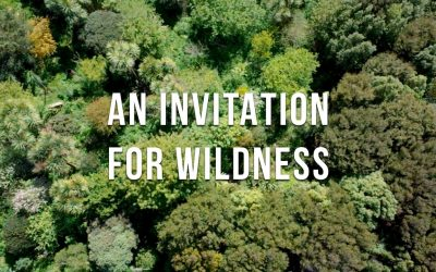 Thriving 23-Year-Old Permaculture Food Forest – An Invitation for Wildness