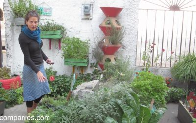 Experiments in Small Space Gardening in Mexico City
