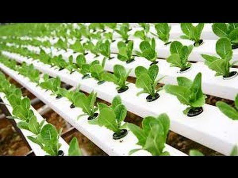 Hydroponic Gardening – Grow Organic Plants Fast