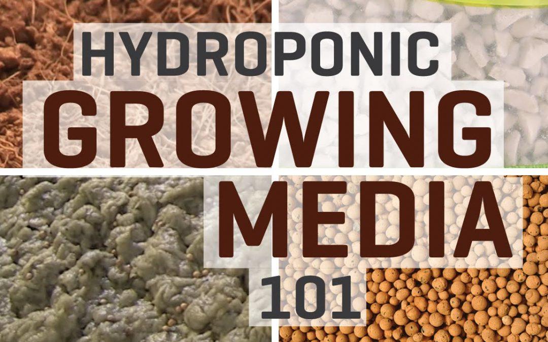 Hydroponics: Growing Media 101