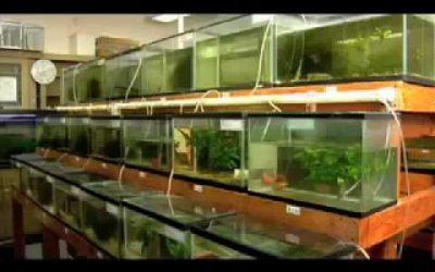 Urban Aquaculture: Fish Farming in the City