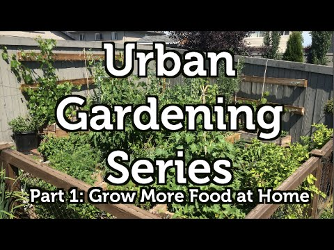 Grow More Food at Home: The Urban Gardening Series