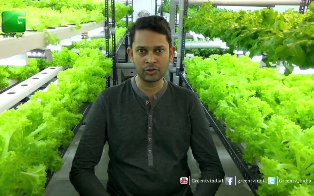 Ajay Naik, CEO- Talking About Hydroponics Technique