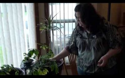 Frugal Self-Sufficiency Tip:Growing Herbs All Year Round